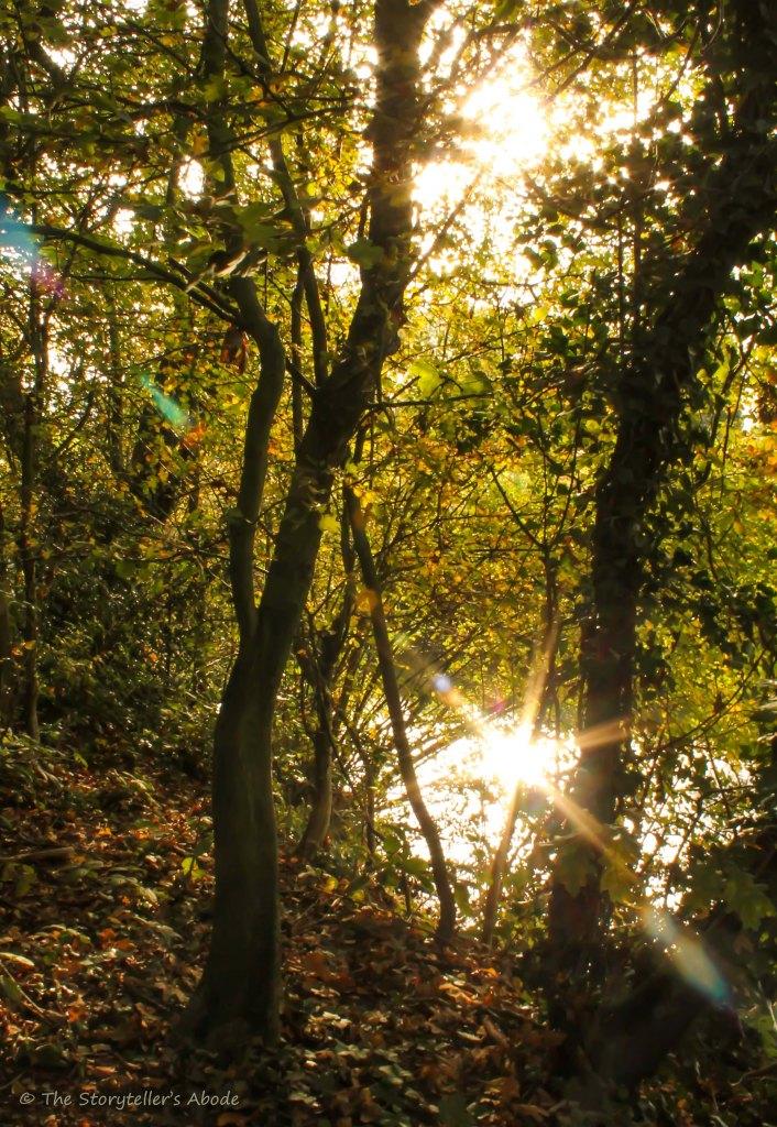 sunlit stream through trees