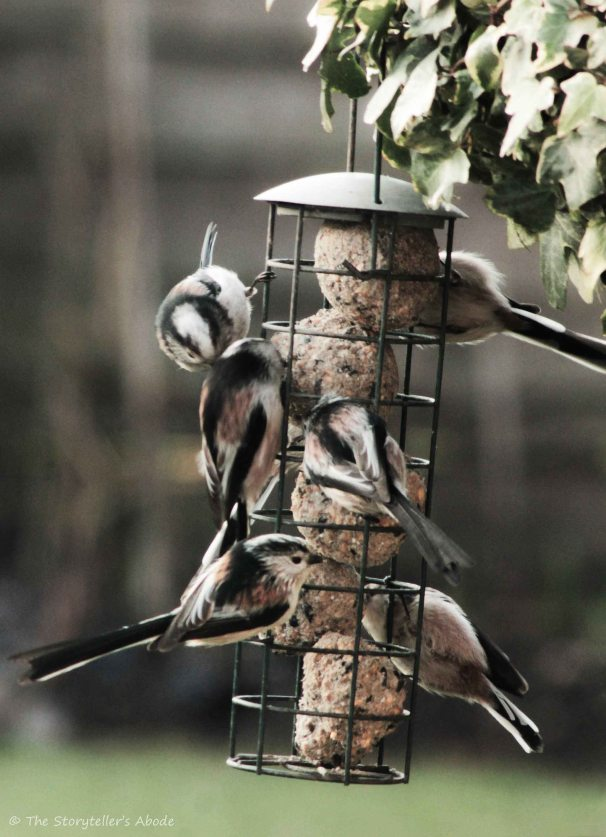 birds on feeder3