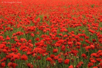 poppy field small