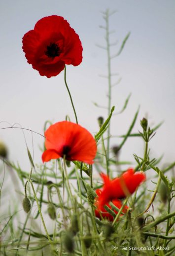 poppys small