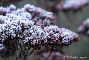 Frosty seed heads