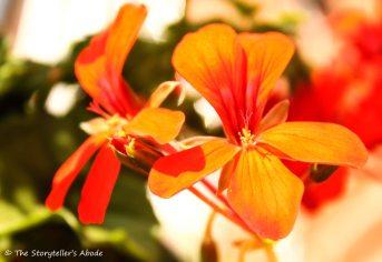 orange flower 2 small