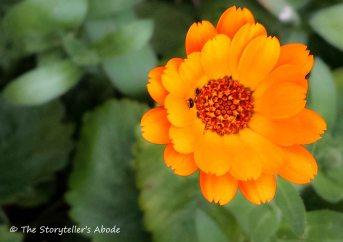 Orange Flower small 2