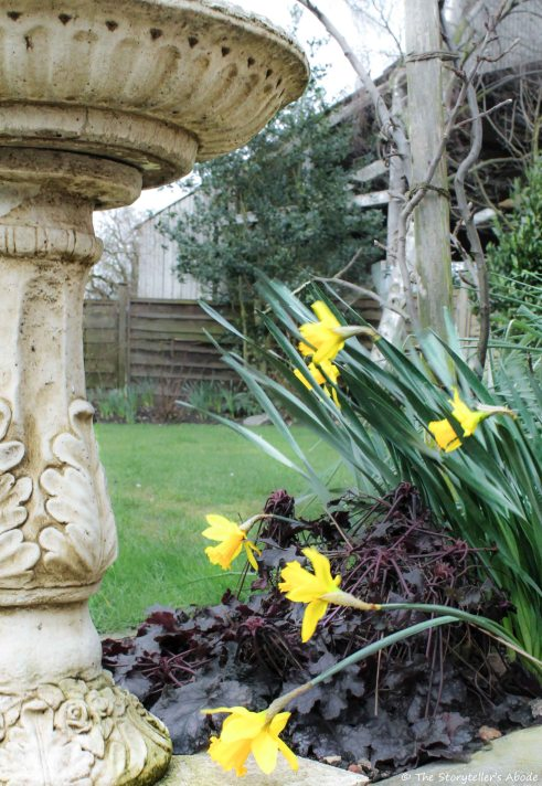 windblown daffodils