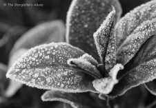 frosty leaves small