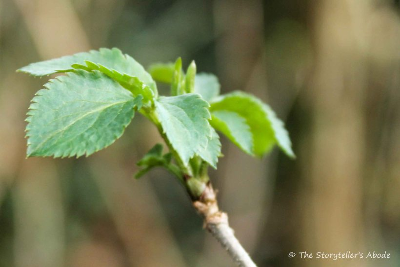growing leaves small