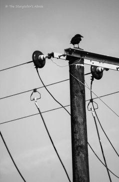 telegraph pole