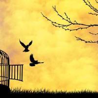 MWC: Freedom
