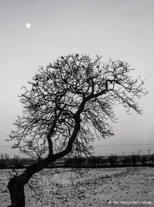 walnut tree small