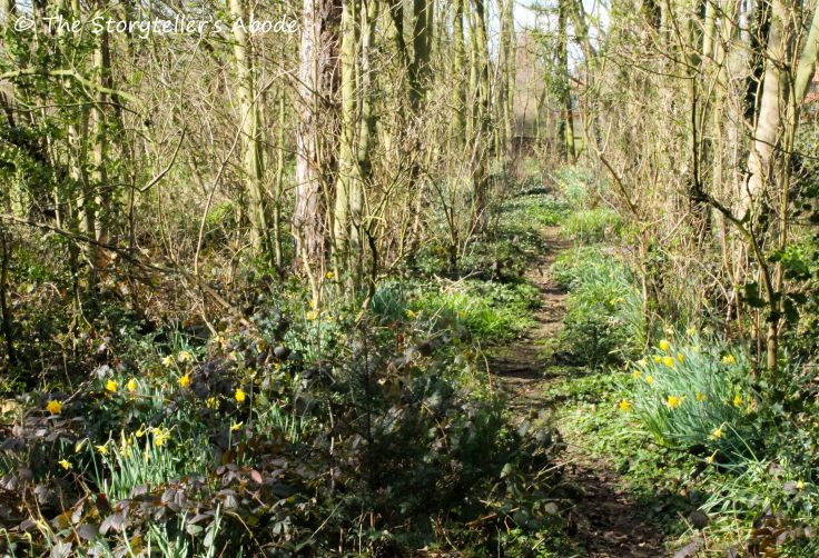 path with daffodils small