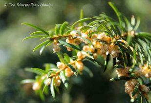 pine tree small