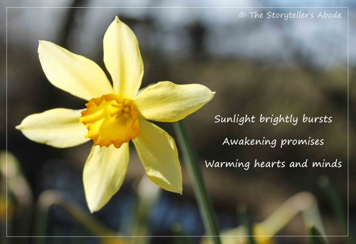 Sunburst Daffodil with haiku small