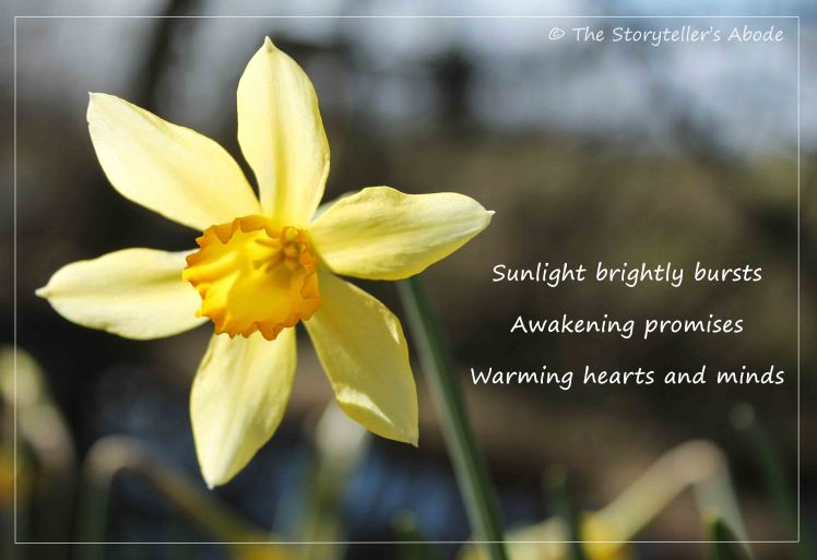 Sunburst Daffodil with haiku small