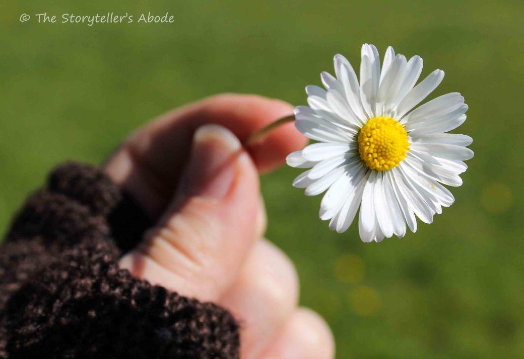 daisy small.jpg