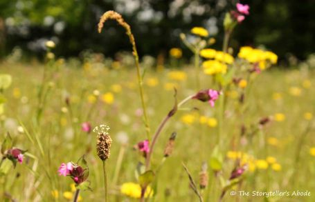 102 end of may meadow