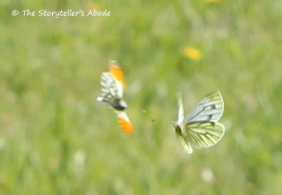11 dancing butterflies 3