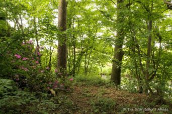 114 stream bank with rhododendron