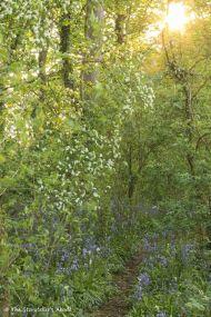 41 woodland path with sunburst