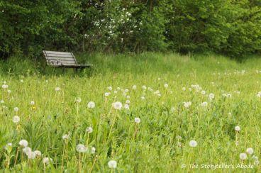 49 bench by dandelion clocks 3