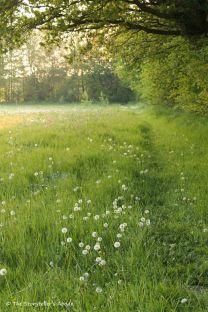 58 path beside meadow 2