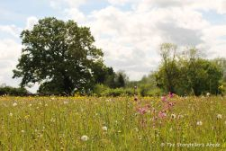 62 meadow