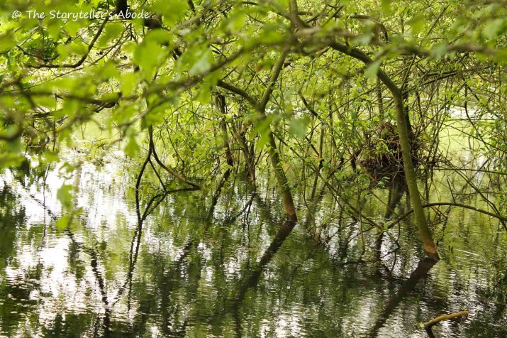82 branches in water with nest