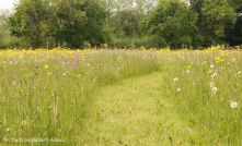 87 path through end of may meadow