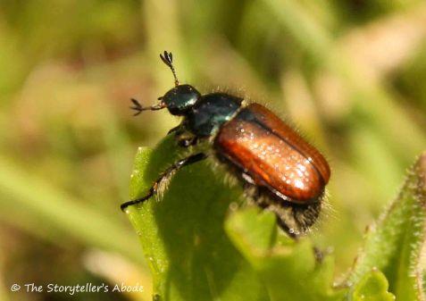 98 beetle 2