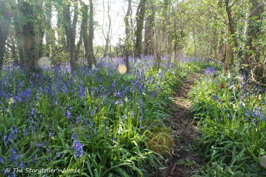 bluebell path 3