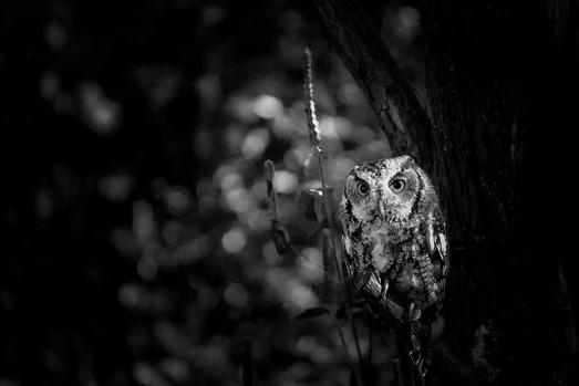 owl-1377983_640