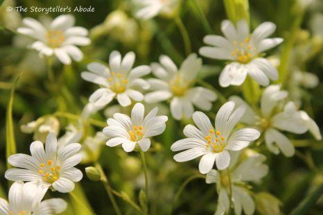 rare white flowers