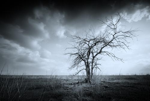 shutterstock_dead tree