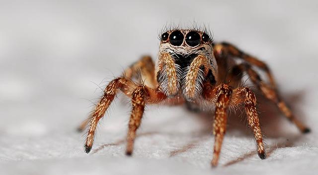 spider-564685_640