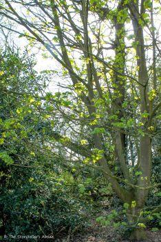 sunlit greenery