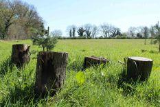 tree stump seating