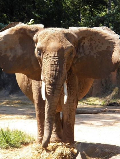 elephant-717377_640
