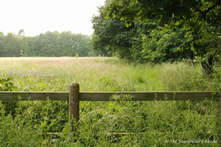fence to meadow