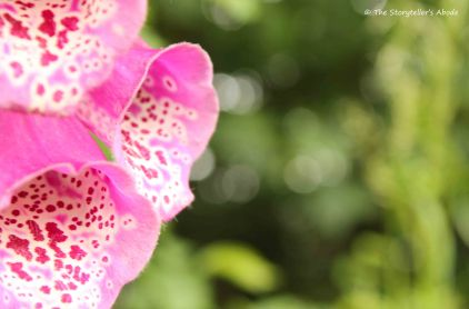 foxgloves with bokah