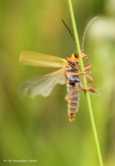 insect on stalk