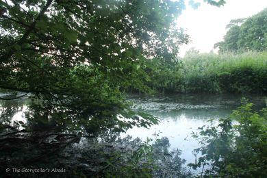 stream at dawn
