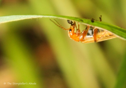 upside down insect