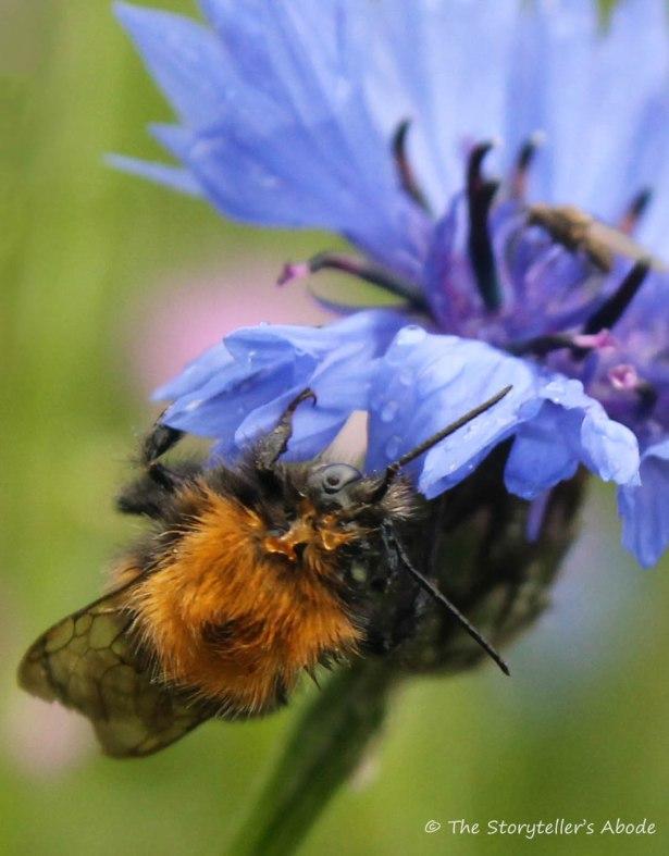 wet bee 2