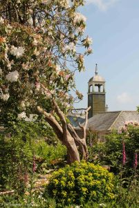 Bell Tower and Tree