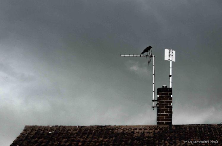 bird in gathering storm 3