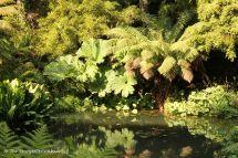 Jungle Pond