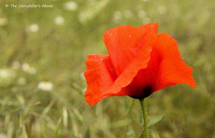 poppy 2.2.jpg