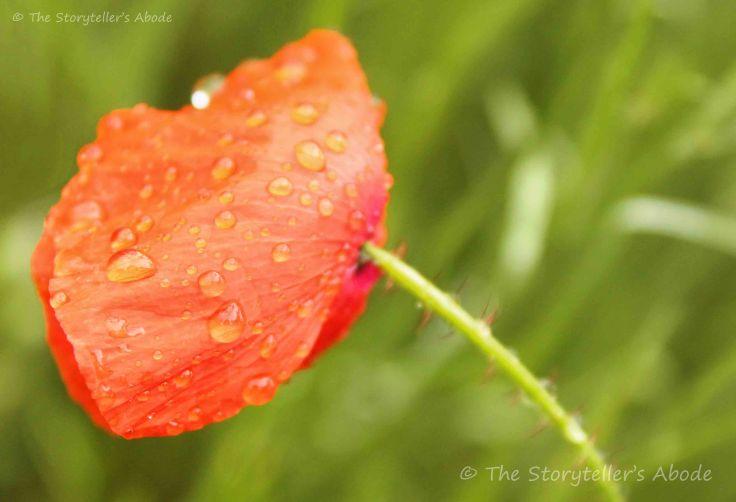 poppy 5