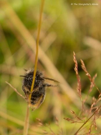 Bee on Stalk