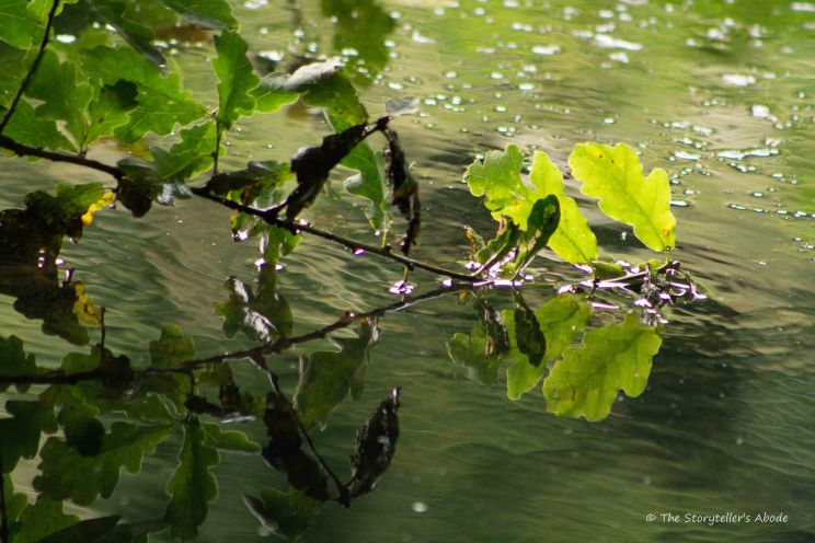 Branch Kissing Water