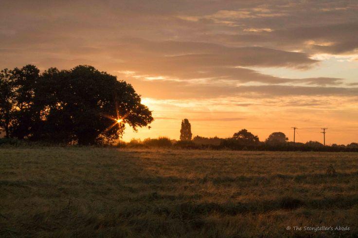 Dawn Sunburst